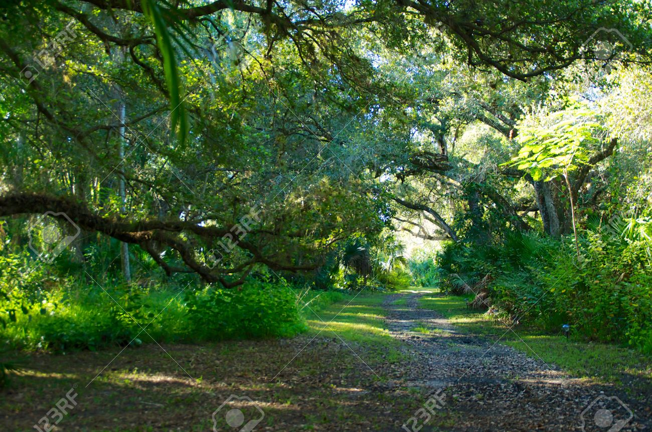 a leaf covered dirt road leads through an overgrown section of