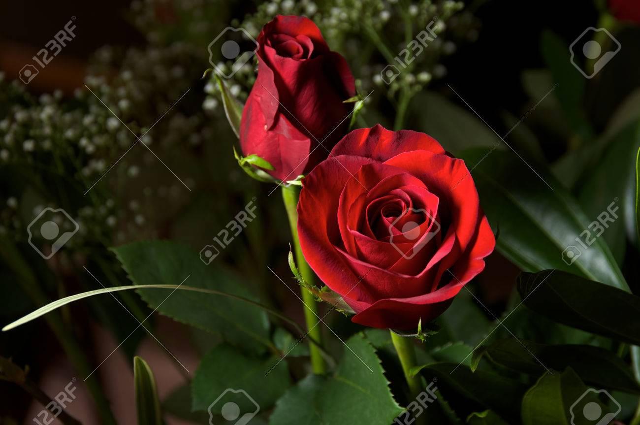 Luce Principale è Focalizzata Sul Fiore Di Una Rosa Rossa In Fiore