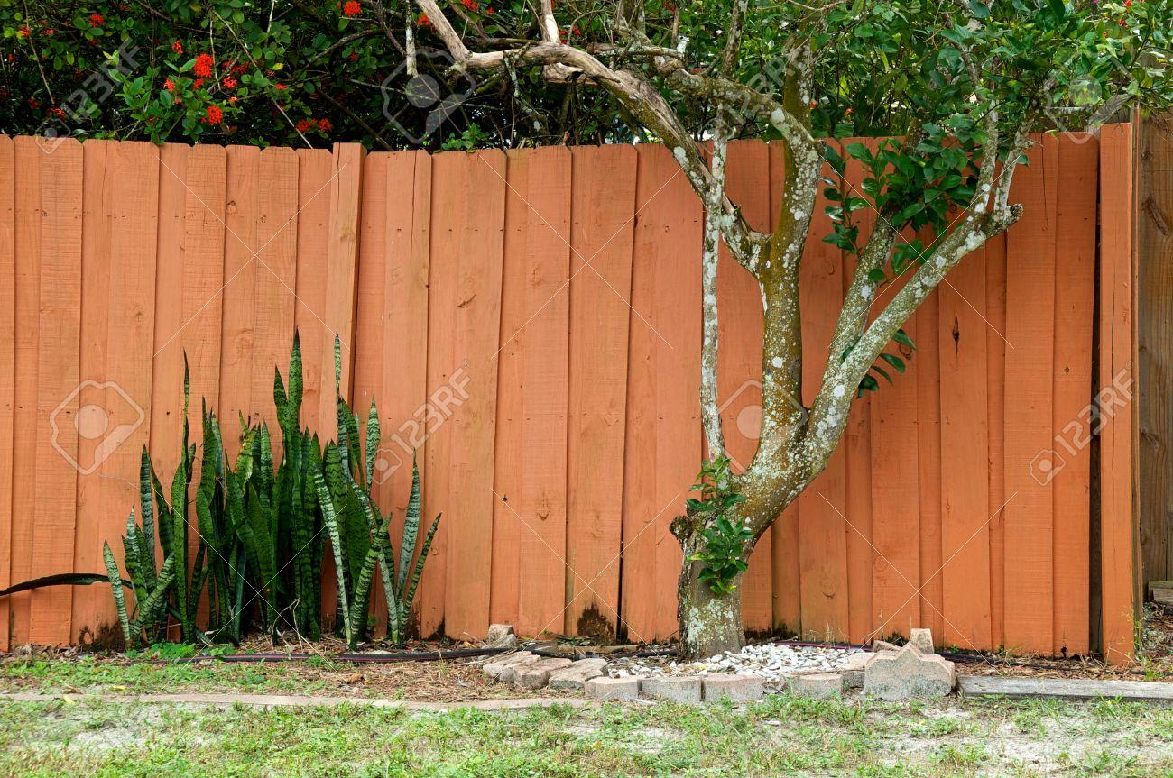 Backyard Jardin A Bonita Springs En Floride Montrant Mur En Bois De Cloture Arbre D Agrumes D Orange Et La Mere Dans L Usine De La Loi Langue