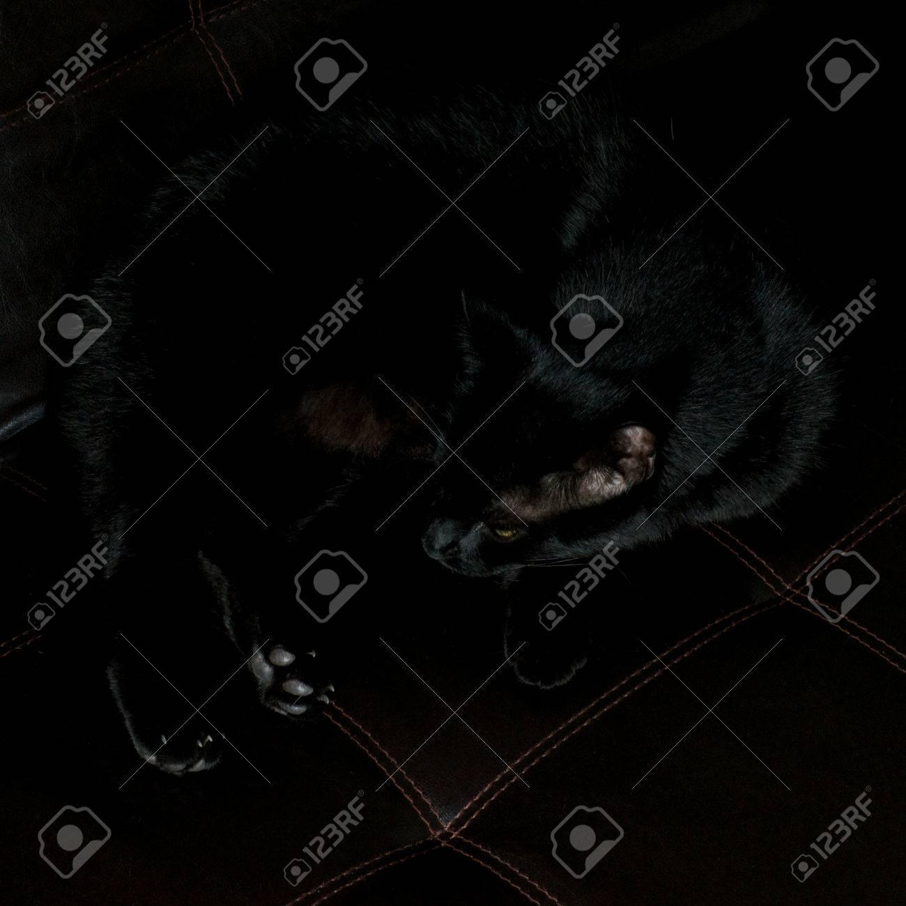 Gatto Divano Pelle.Un Gatto Nero E Stabilisce Che Poggia Su Un Divano In Pelle Nera
