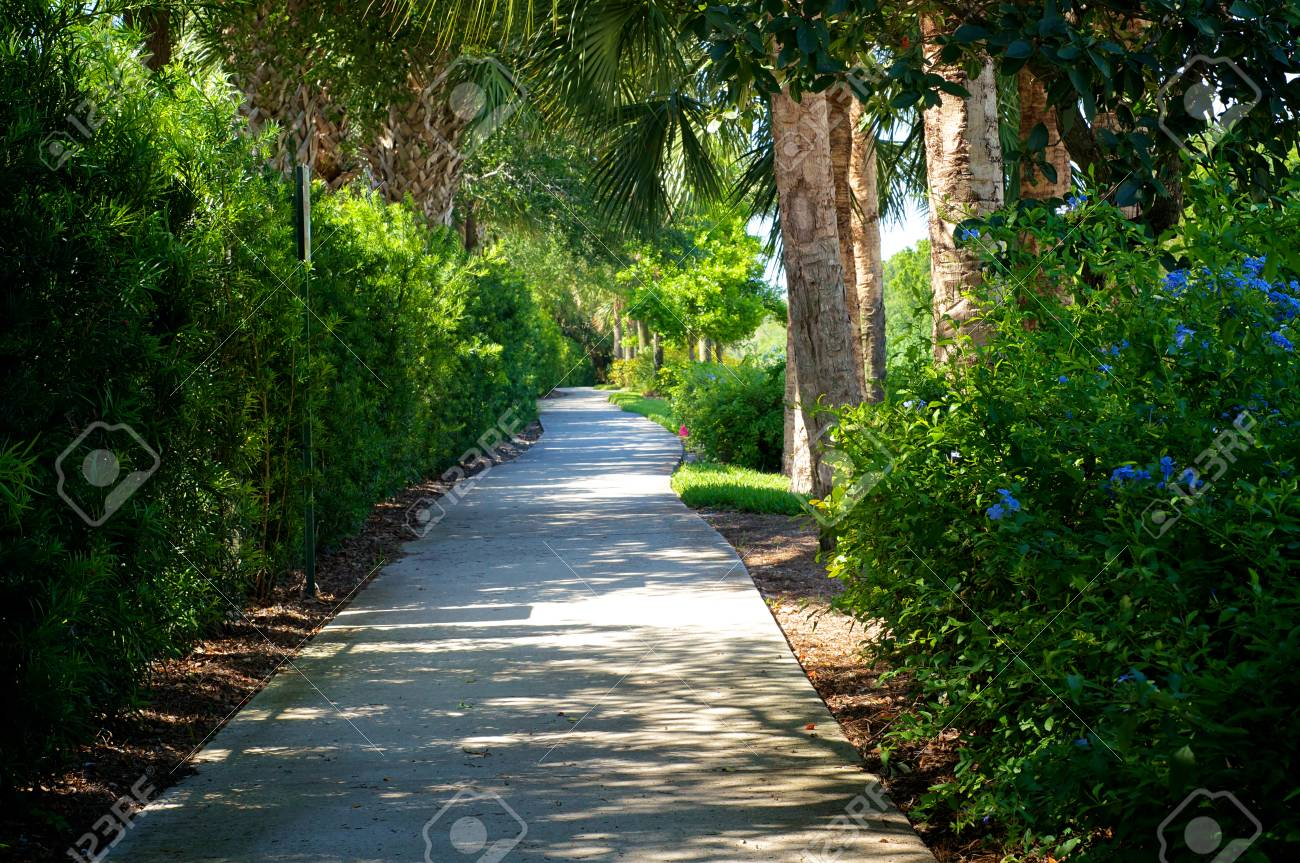 View of beautiful tree lined bike path that connects bonita springs stock photo view of beautiful tree lined bike path that connects bonita springs to naples in southwest florida in spring time with flowers and tropical mightylinksfo