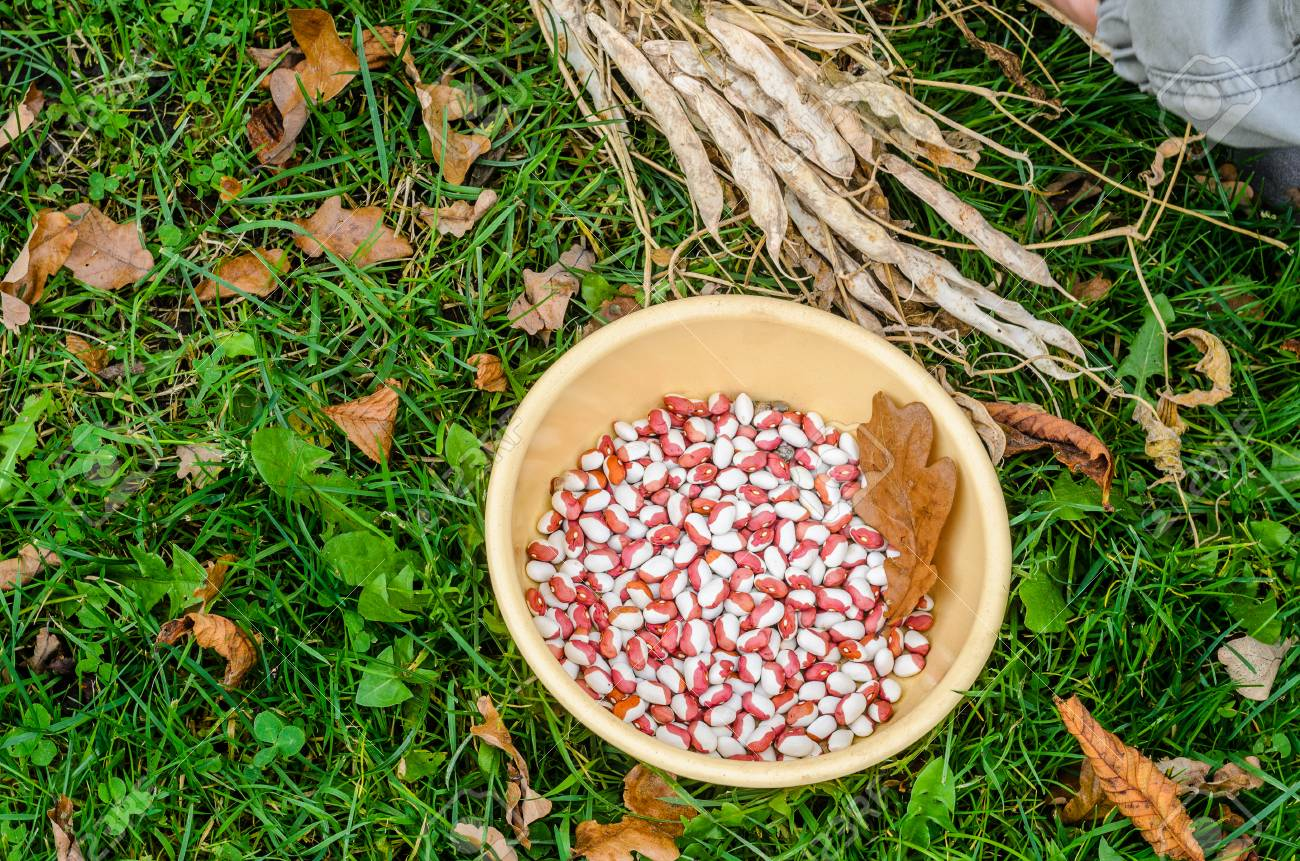 Yellow Plate With Multi Colored Beans On Green Grass Top View Stock Photo Picture And Royalty Free Image Image 90007333