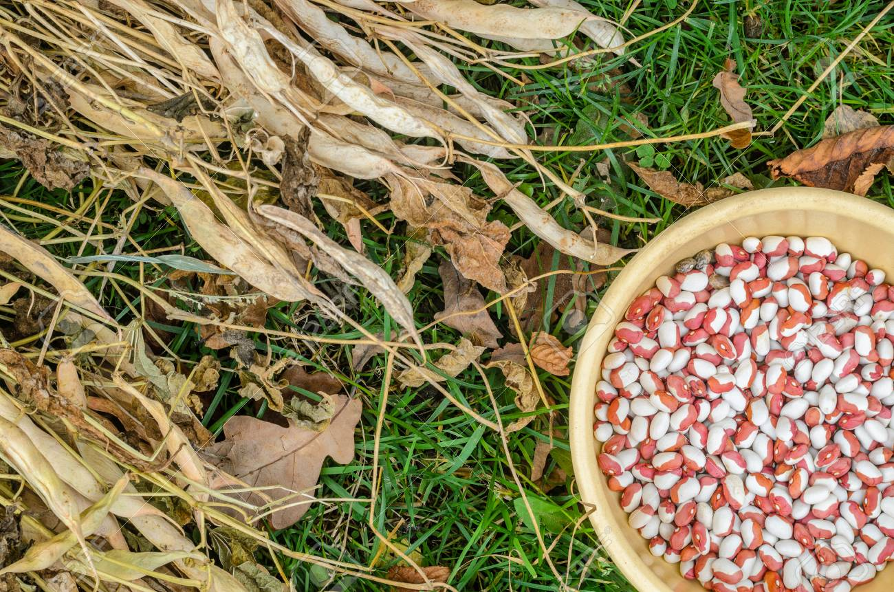 Yellow Plate With Multi Colored Beans On Green Grass Top View Stock Photo Picture And Royalty Free Image Image 90009046