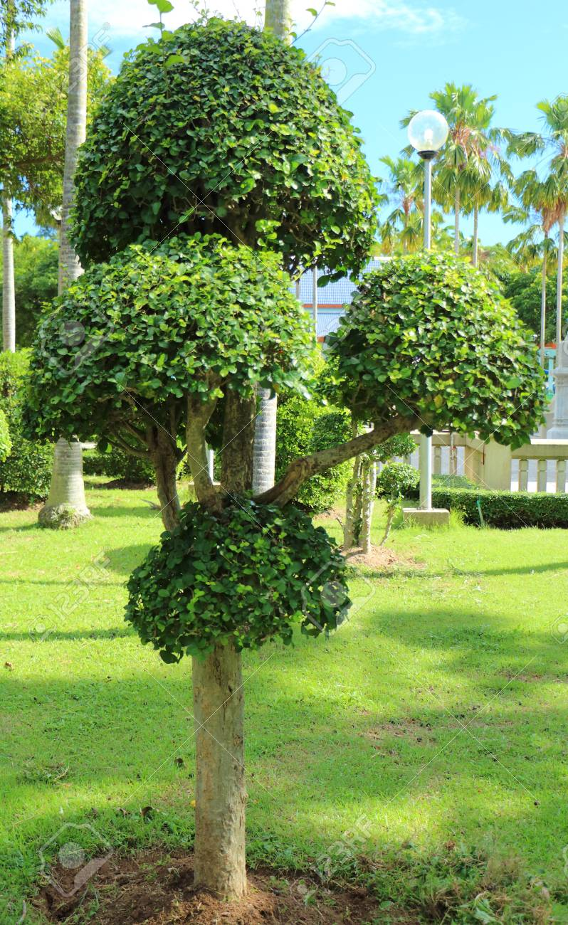 Schöner Baum In Den Schatten Gestellt Garten Im Sonnenschein Tag ...