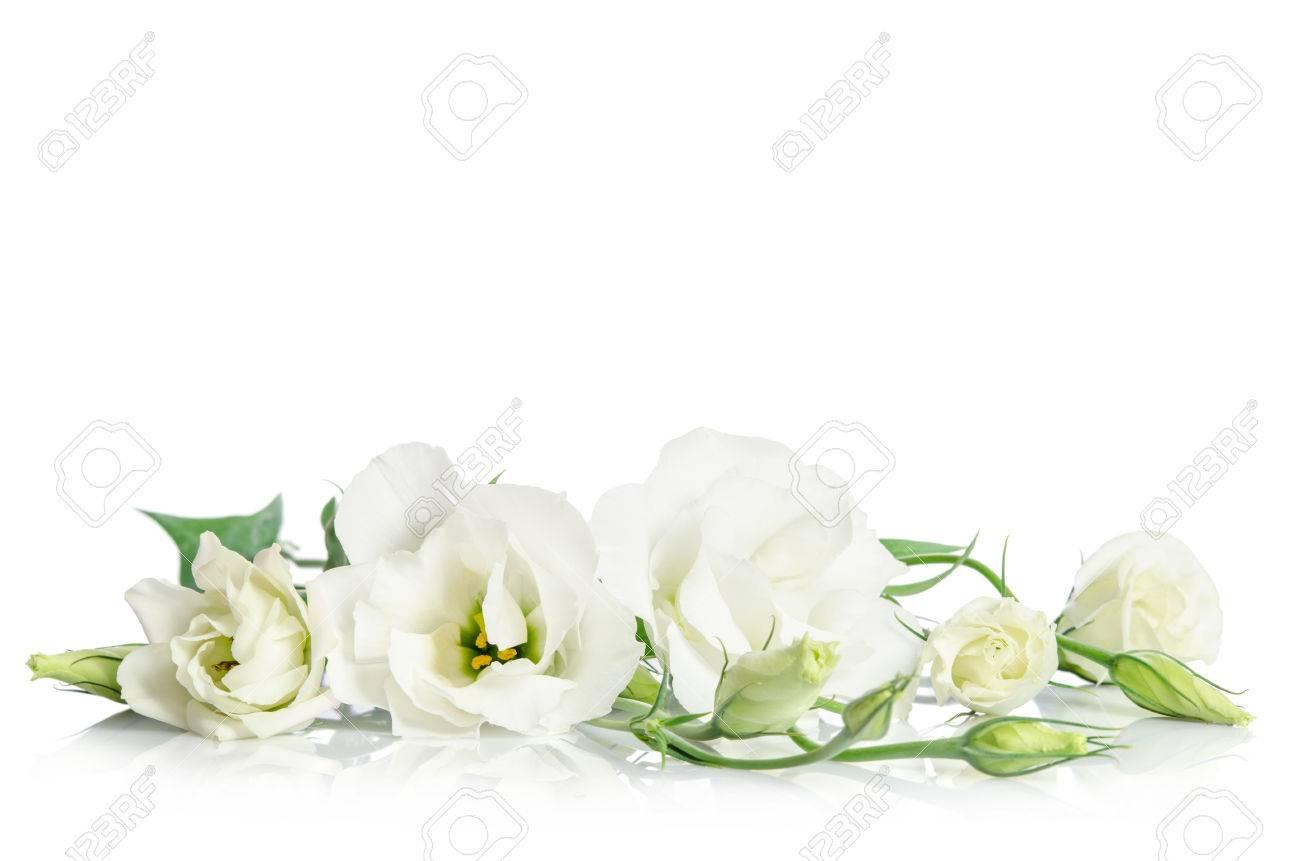 Beautiful white eustoma flowers isolated on white background - 53391490