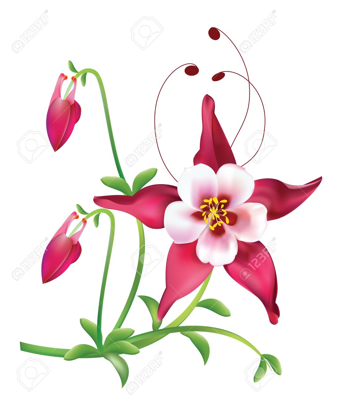 Columbine flower images stock pictures royalty free columbine columbine flower red columbine flower dhlflorist Gallery