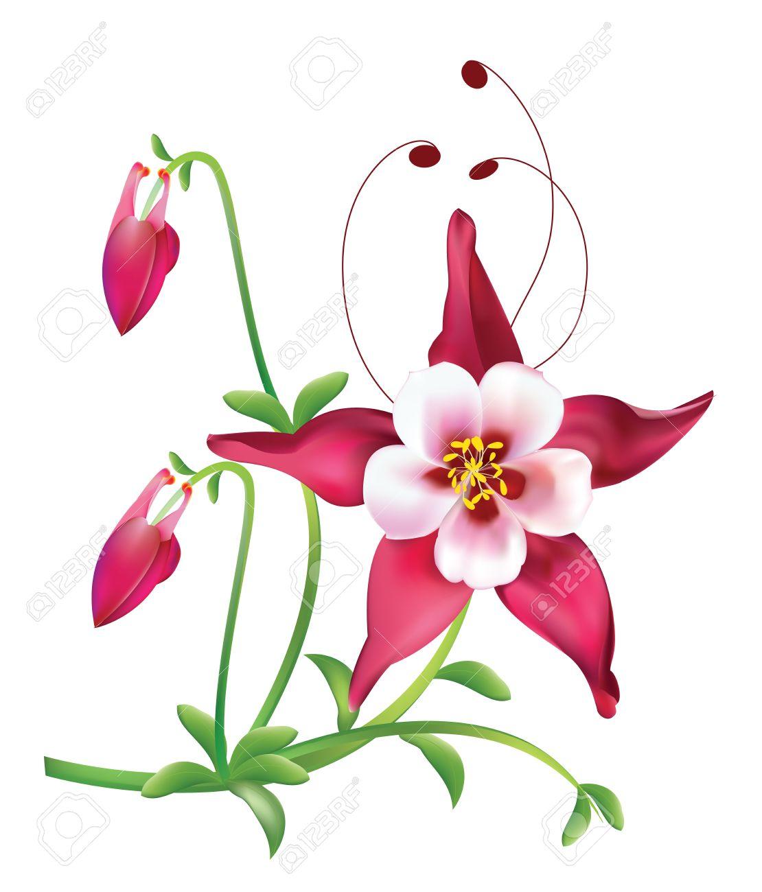 Red columbine Flower Stock Vector - 13548251