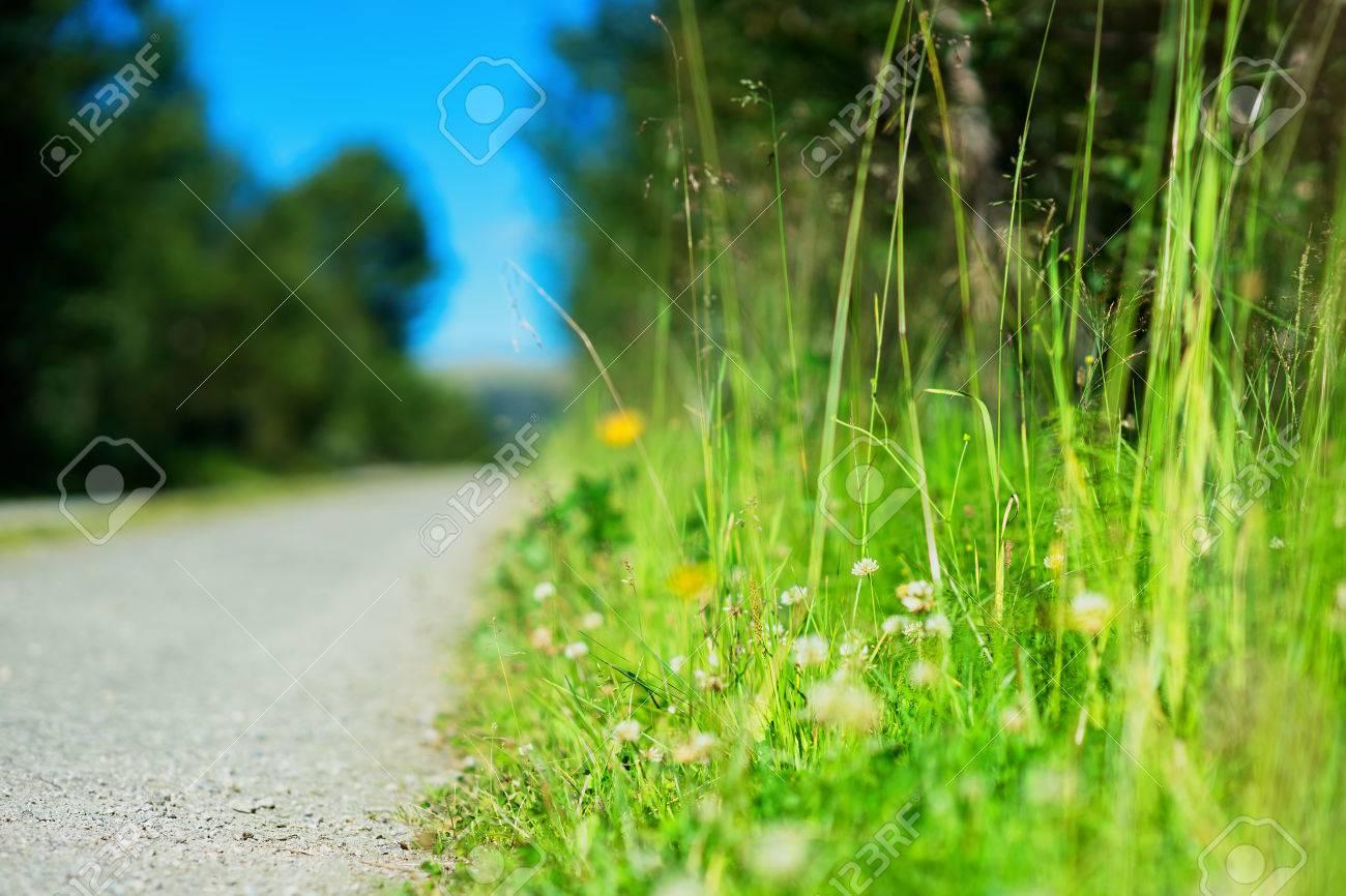 緑の国の道路の近くに草 hd を背景 ロイヤリティーフリーフォト
