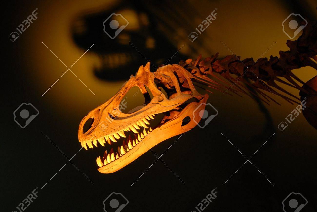 Photo of a dinosaur skeleton Stock Photo - 4137579