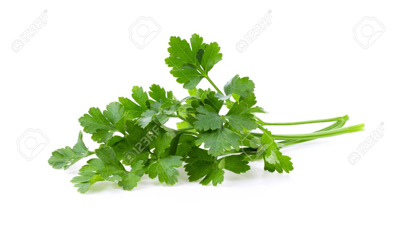 fresh parsley isolated on white background. full depth of field - 128360106