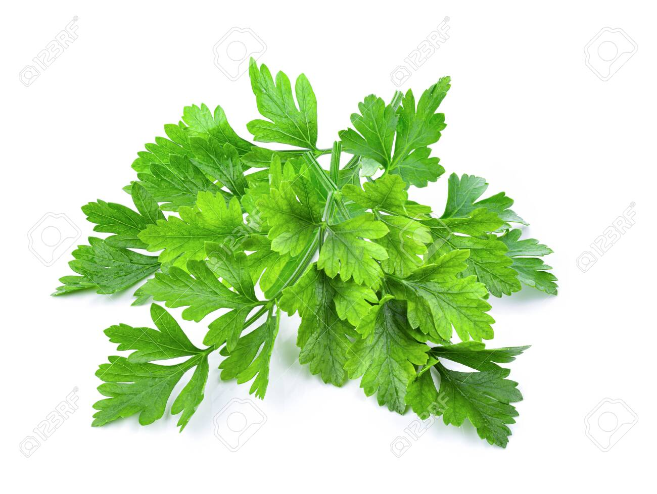 Parsley isolated on a white background - 136593007