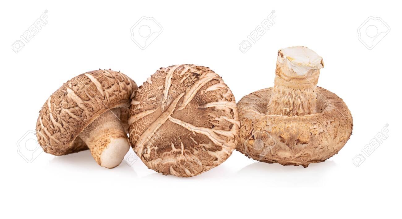 Shitake mushroom on white background full depth of field - 141680451