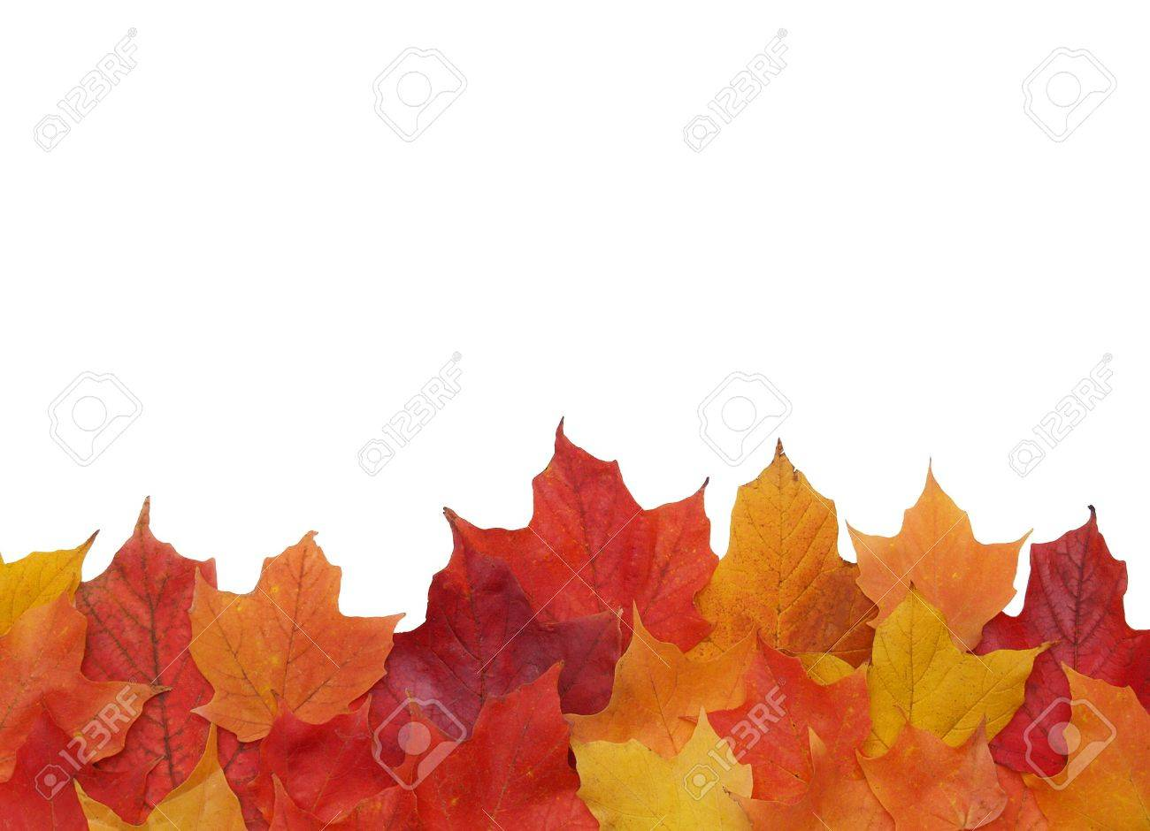 bottom border of colorful fall leaves Stock Photo - 593117