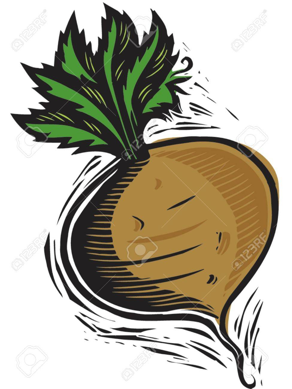 turnip Stock Photo - 15208404