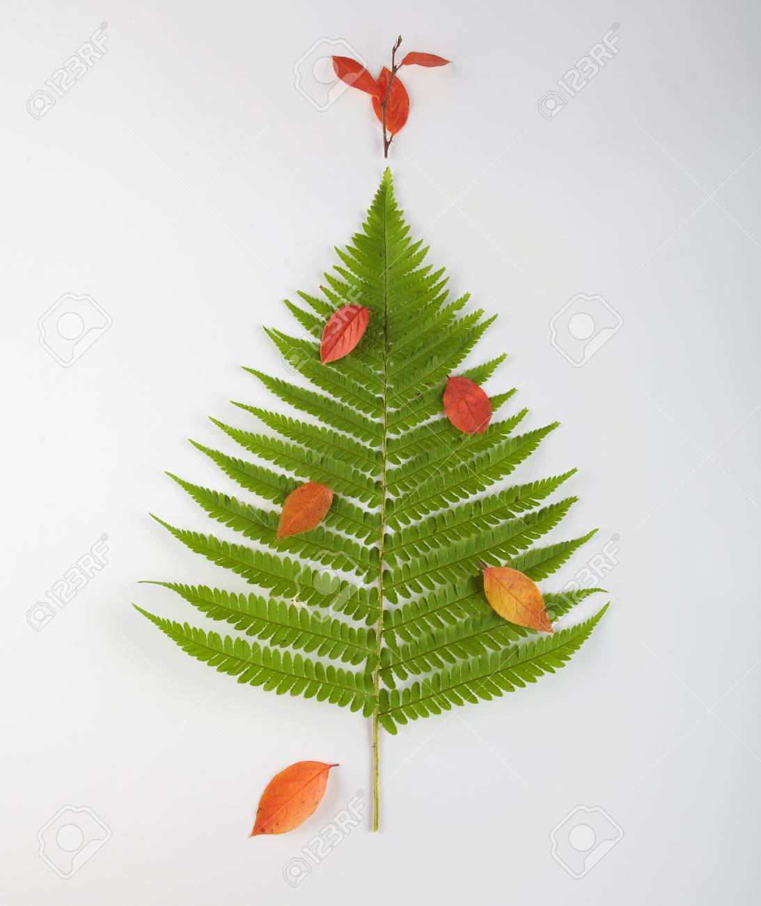 Christmas Tree Made Of Fern Leaves And Branches Holiday Concept