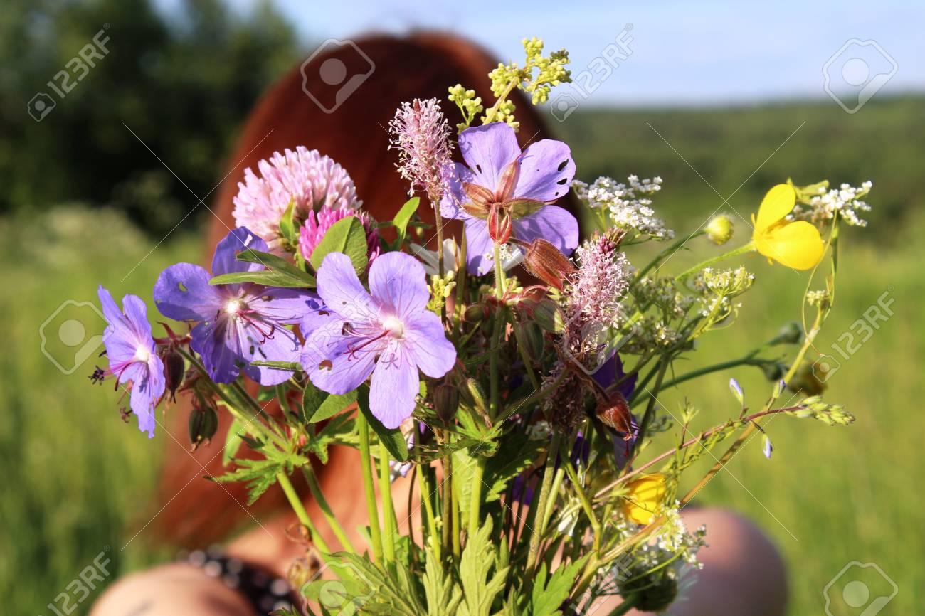 Un Ramo De Flores Silvestres En Las Manos De La Niña Fotos Retratos