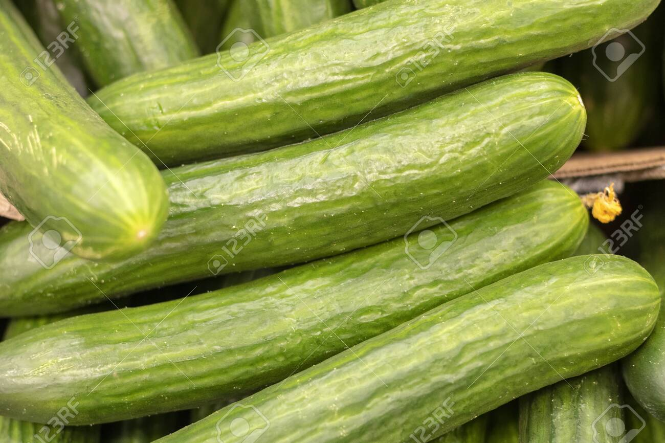 Green cucumbers on shelf in supermarket. Organic eating. Agriculture retailer. Farmer's food. - 128595491