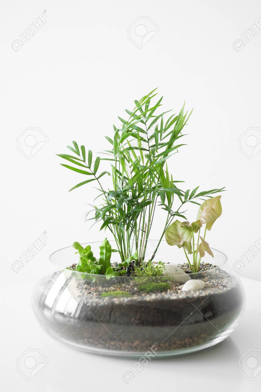 Several Different Green Plants In A Glass Pot On A White Background