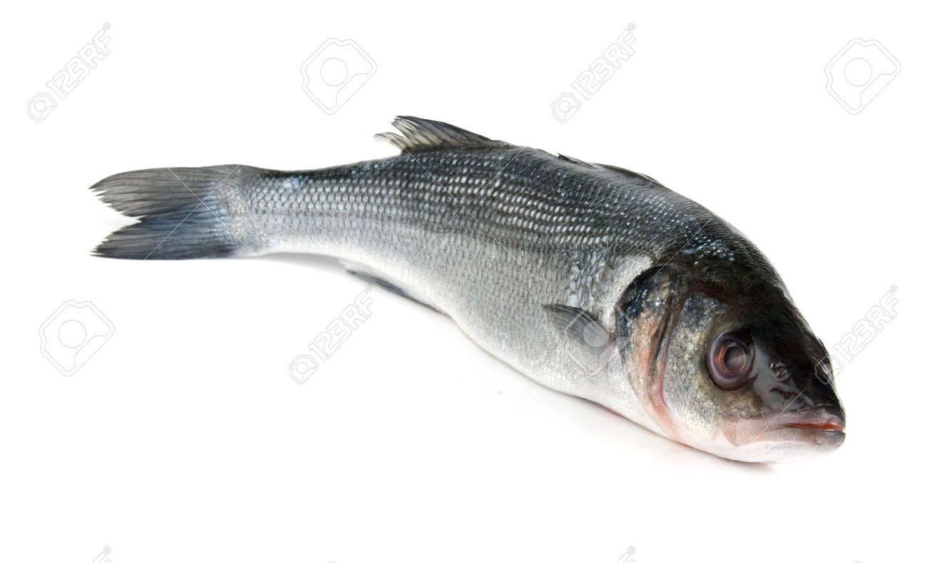 Raw fish isolated on white background Stock Photo - 6209840