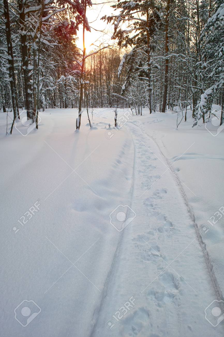 Stamped path in the snowy forest Stock Photo - 6177944