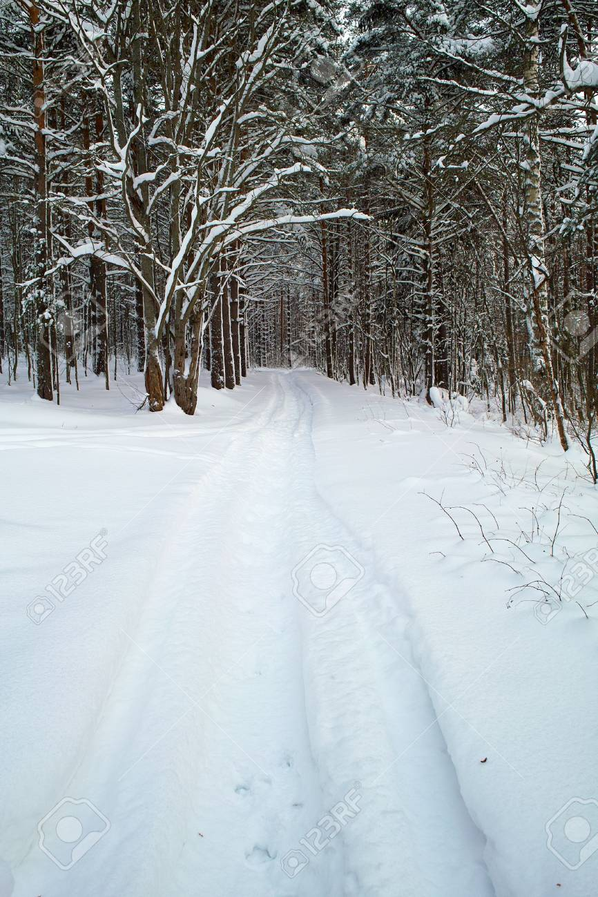 Stamped path in the snowy forest Stock Photo - 6177946