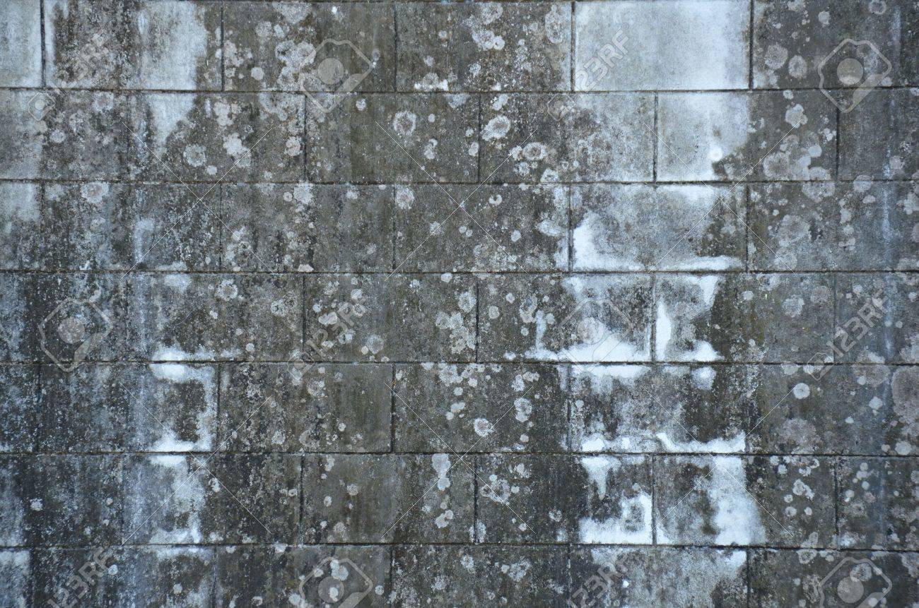 Concrete wall with black mold Stock Photo - 18819765