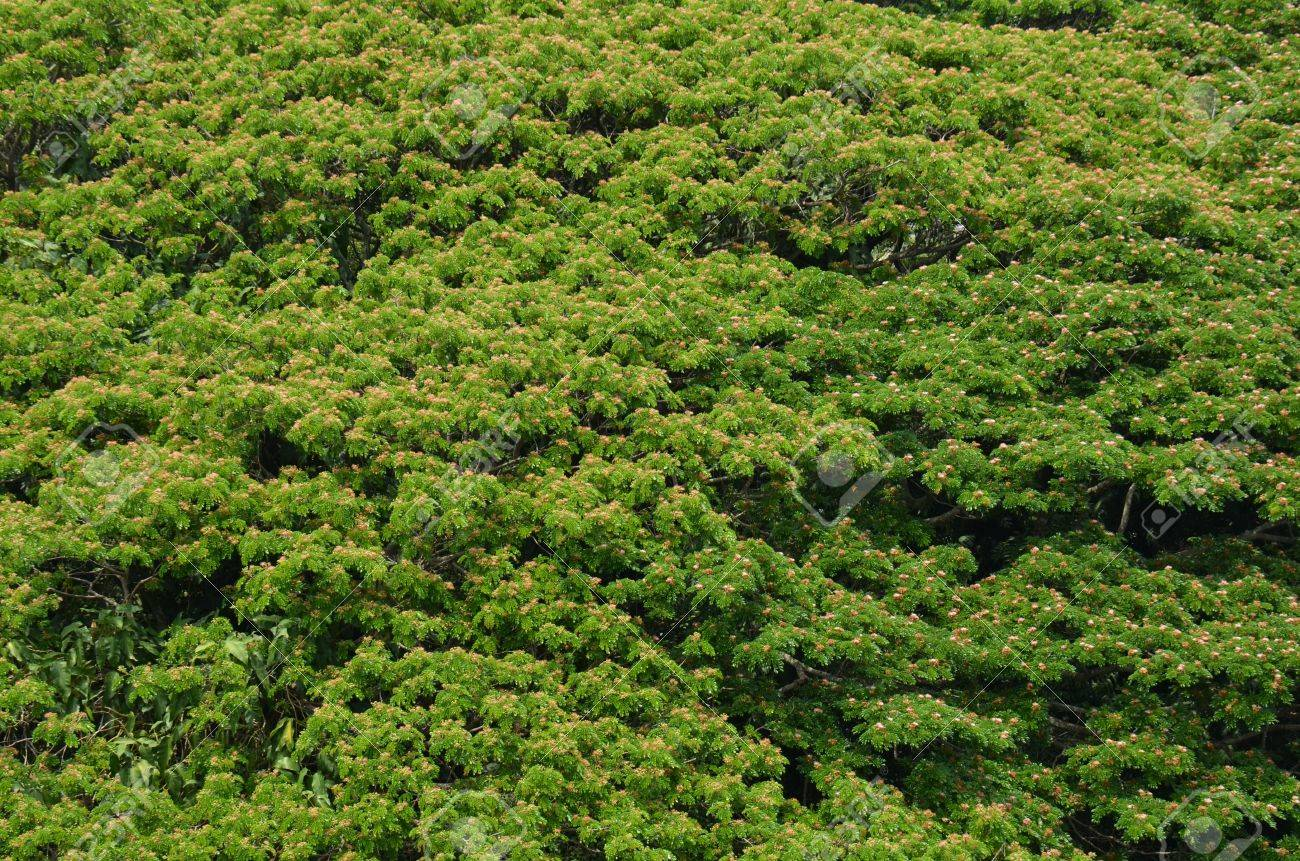 Green treetops background Stock Photo - 18819763