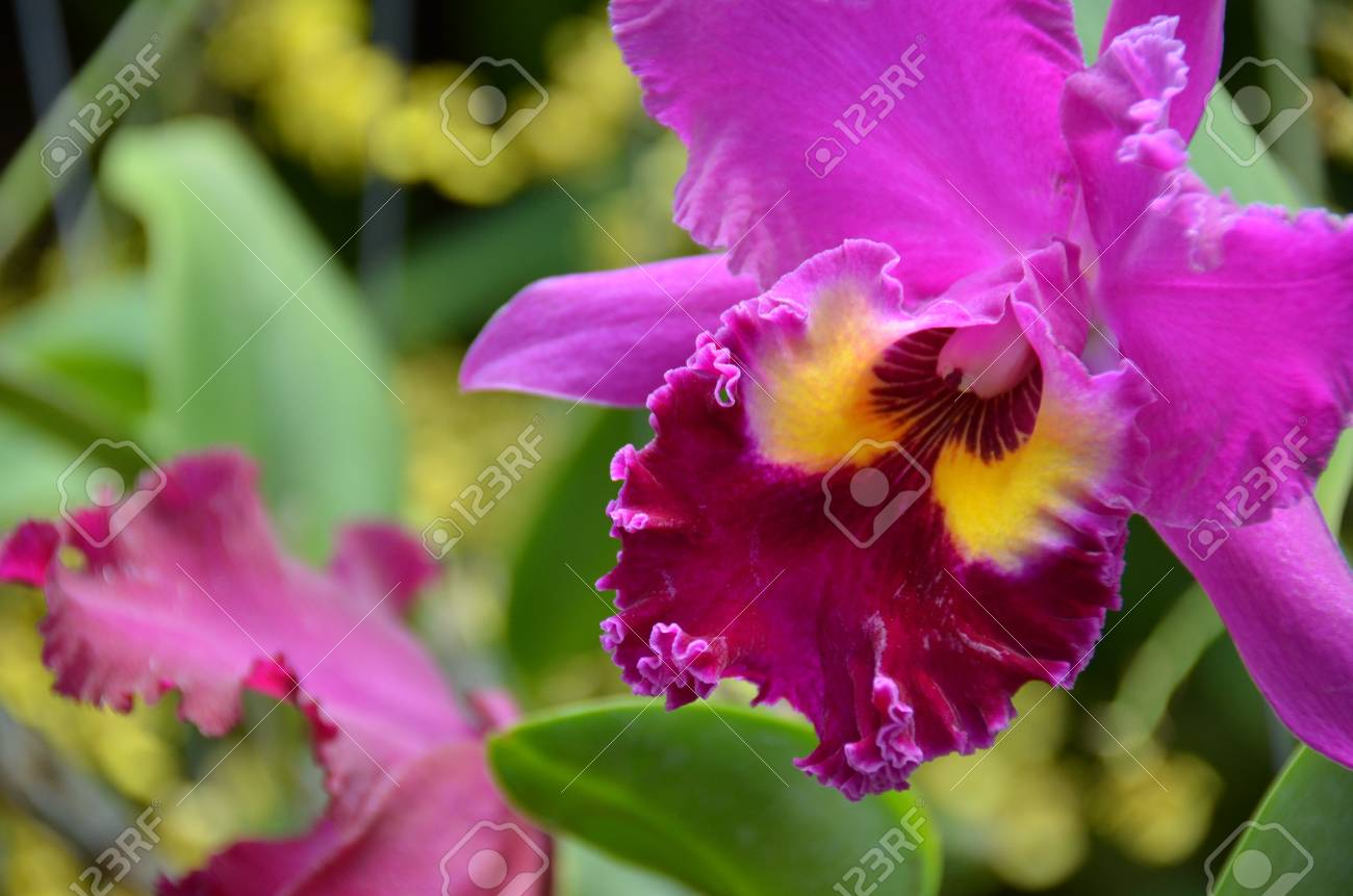 Pink flower Stock Photo - 18819532