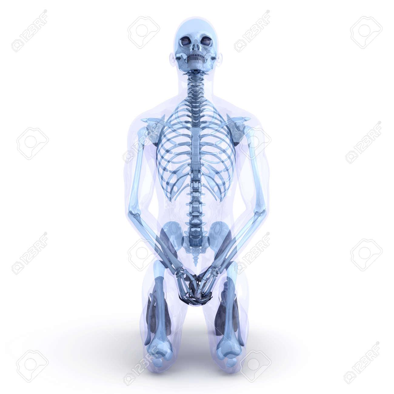 Un Cuerpo Masculino, Humano, Translúcido. Visualización De La ...