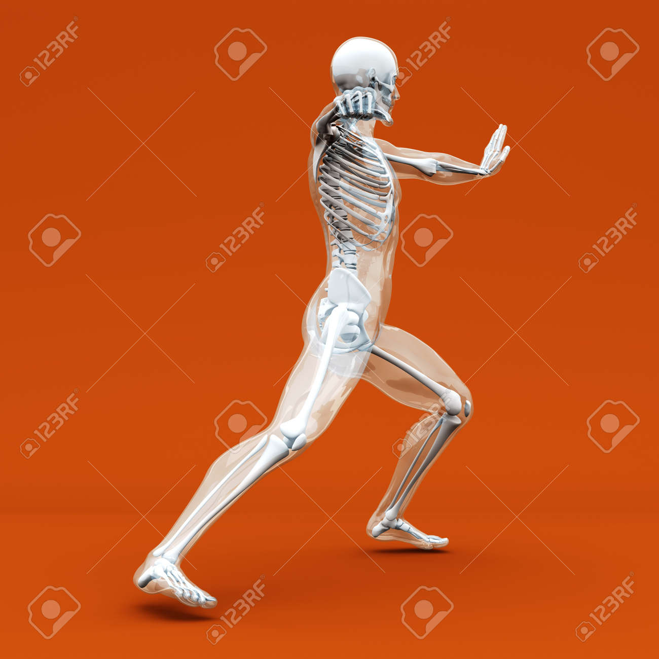 A Medical Visualisation Of Human Anatomy 3D Rendered Illustration Stock