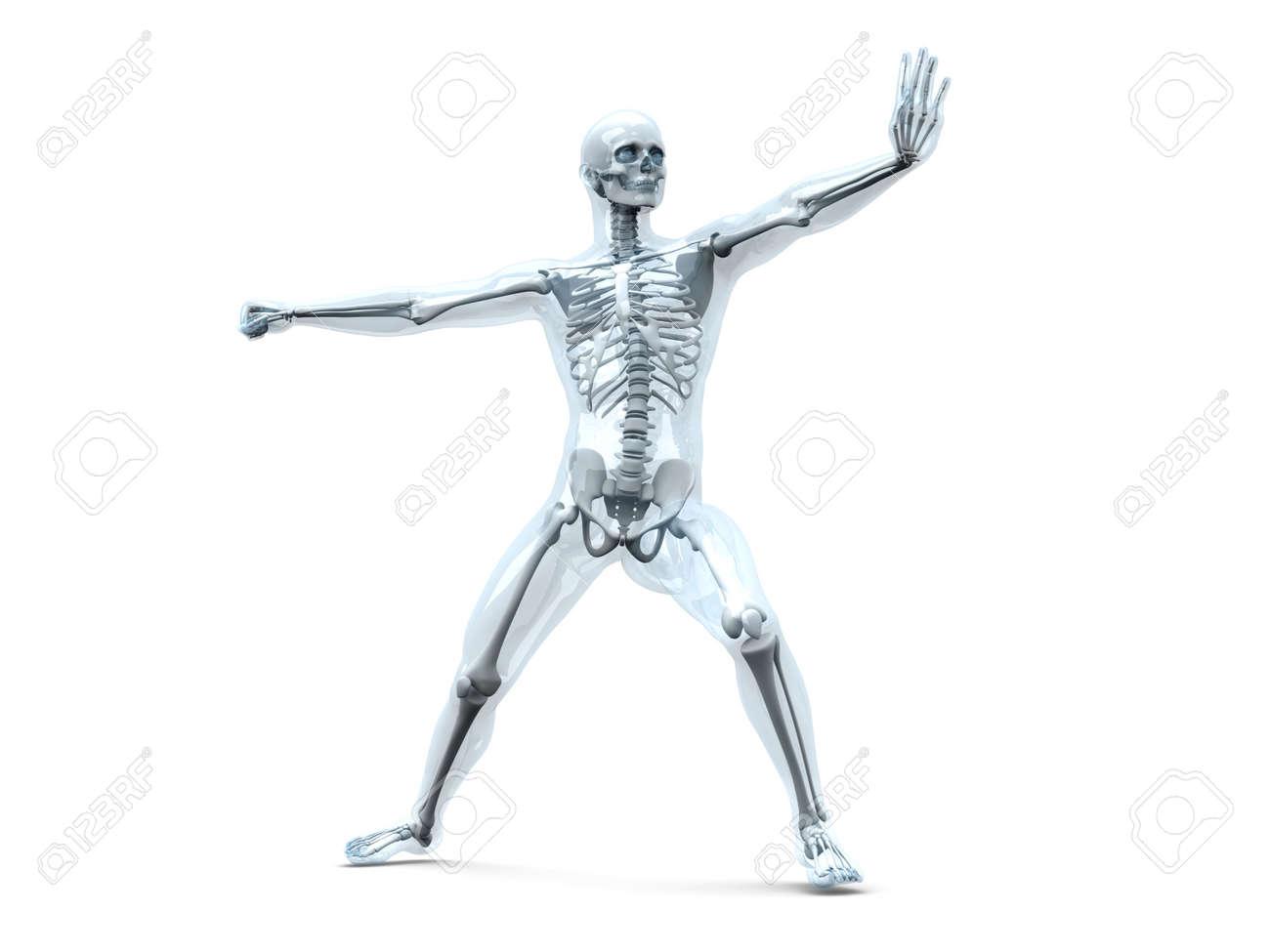 Una Visualización Médica De La Anatomía Humana. 3d Rindió La ...