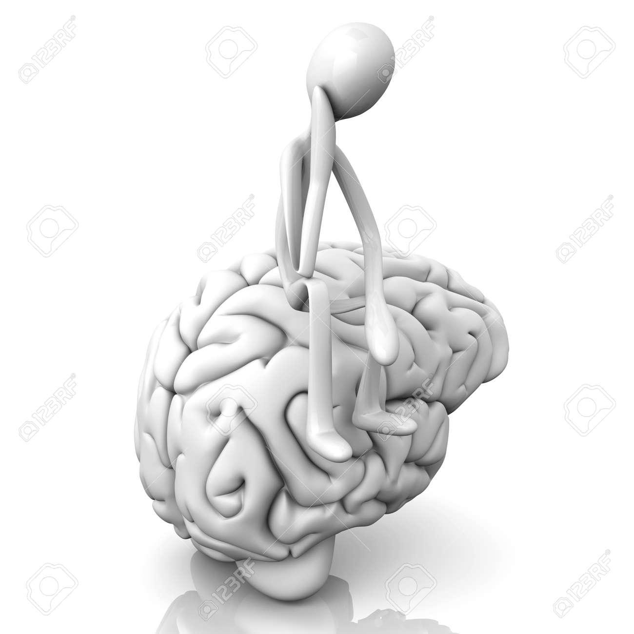 Beste Anatomie Und Physiologie Des Menschlichen Gehirns Ideen ...