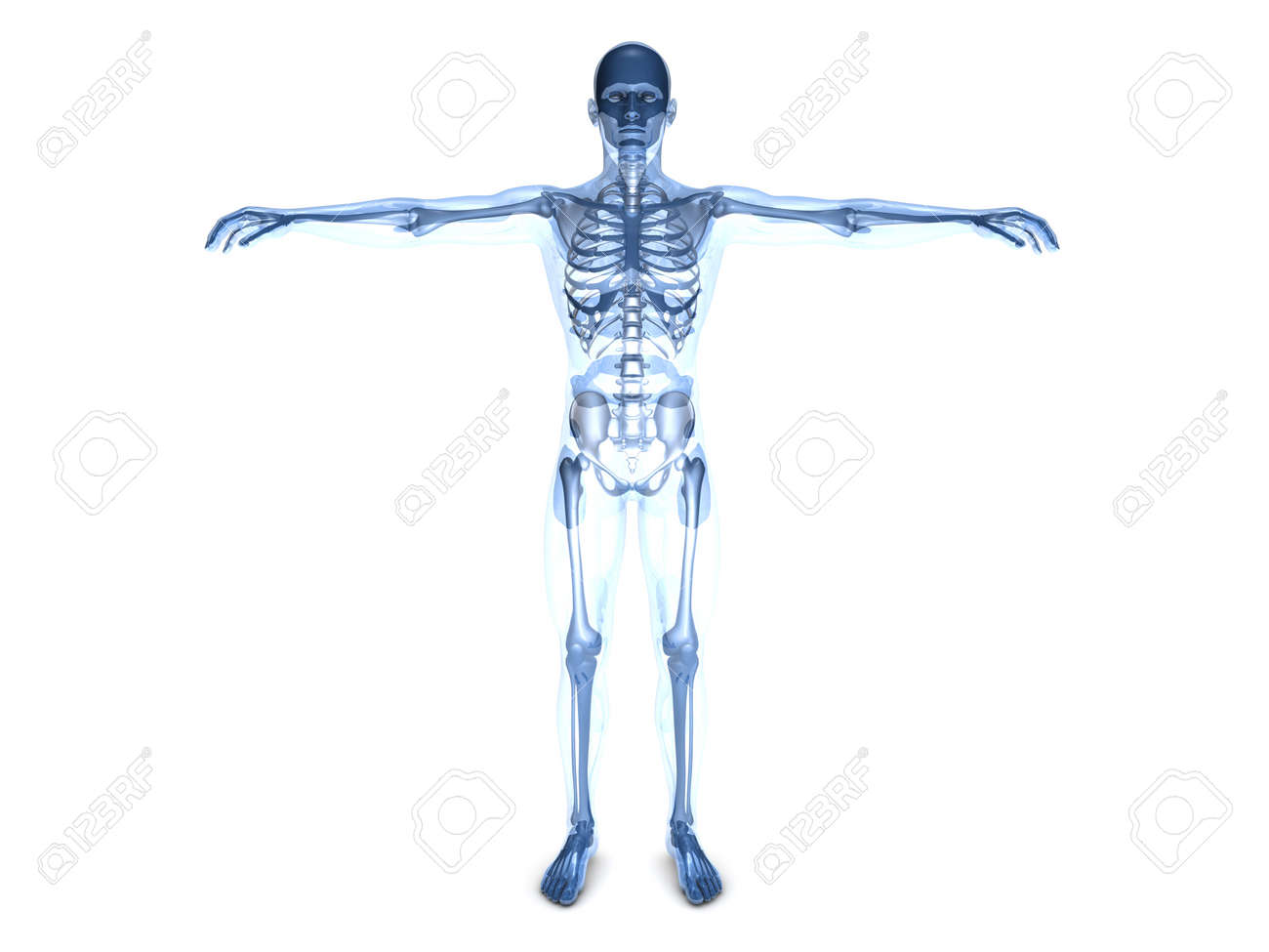 A Medical Visualization Of Human Anatomy 3D Rendered Illustration Stock