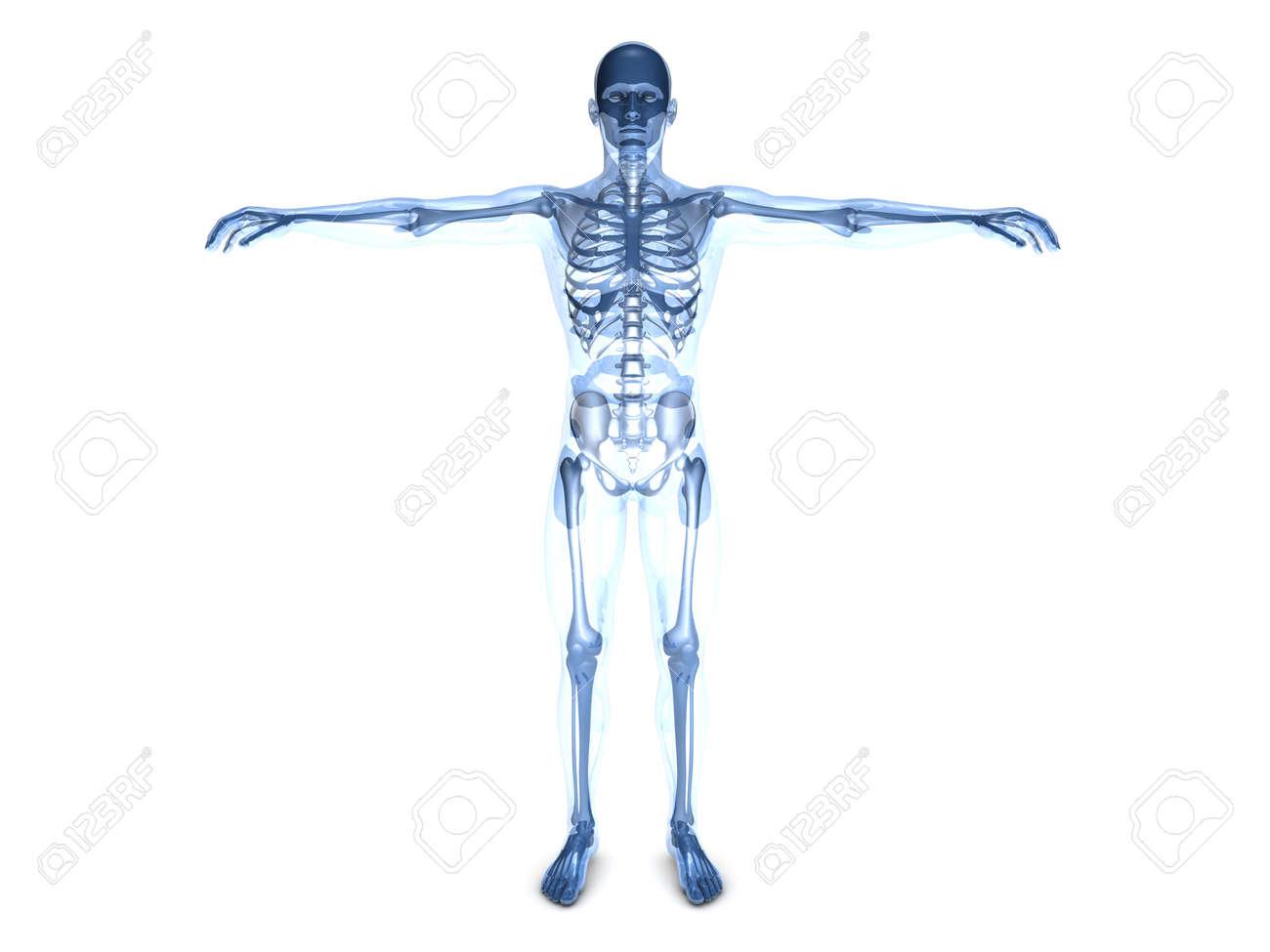 Una Visualización Médica De La Anatomía Humana 3D Representa La ...