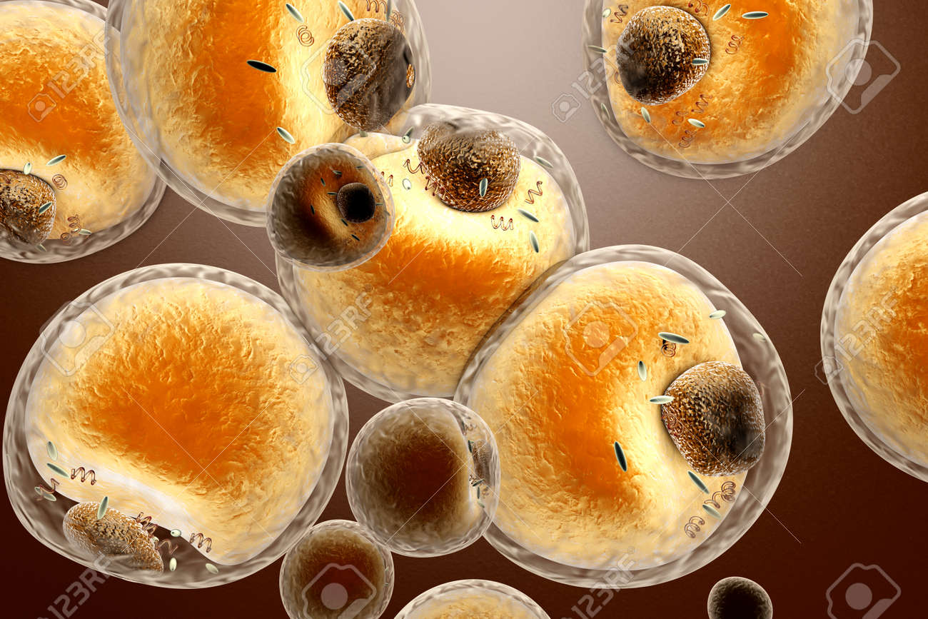 Las Células De Grasa En El Cuerpo Humano. 3d Prestados Ilustración ...
