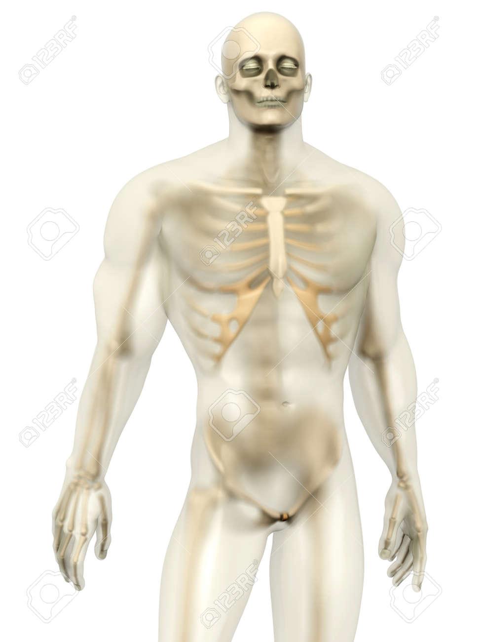 3D-Visualisierung Der Menschlichen Anatomie. Ein Skelett In Einem ...