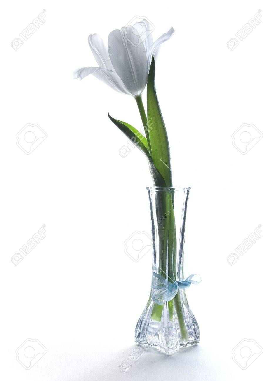 One white tulip in a vase Stock Photo - 3149700