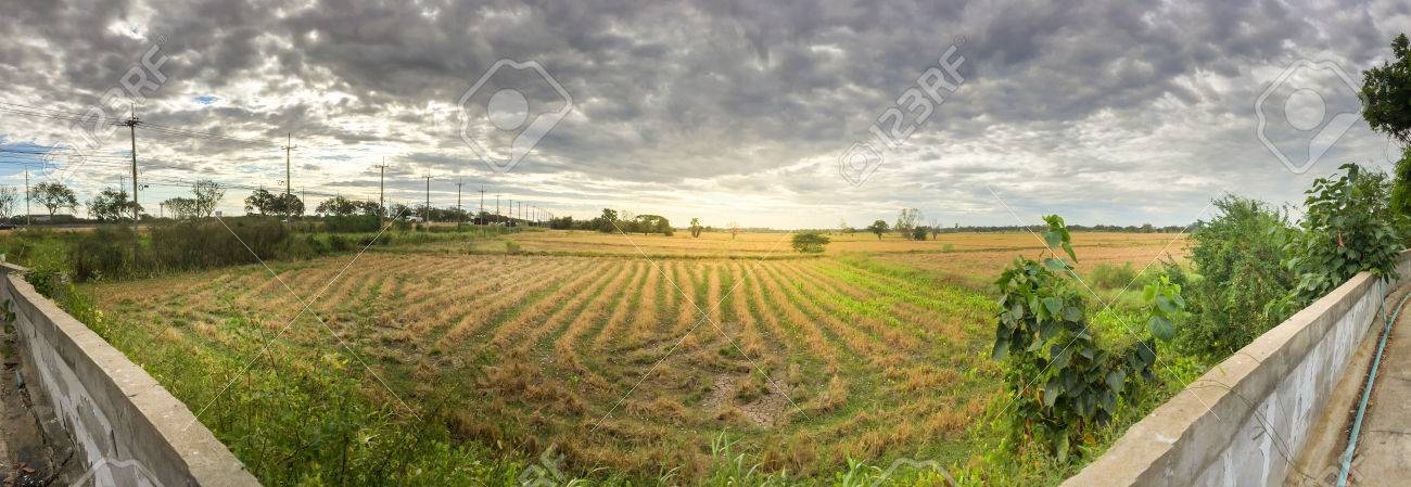 Panorama and hdr grass field in the cloudy background stock photo panorama and hdr grass field in the cloudy background stock photo 35636525 thecheapjerseys Image collections