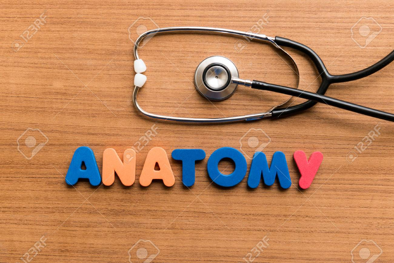 Anatomy Colorful Word With Stethoscope On Wooden Background Stock ...