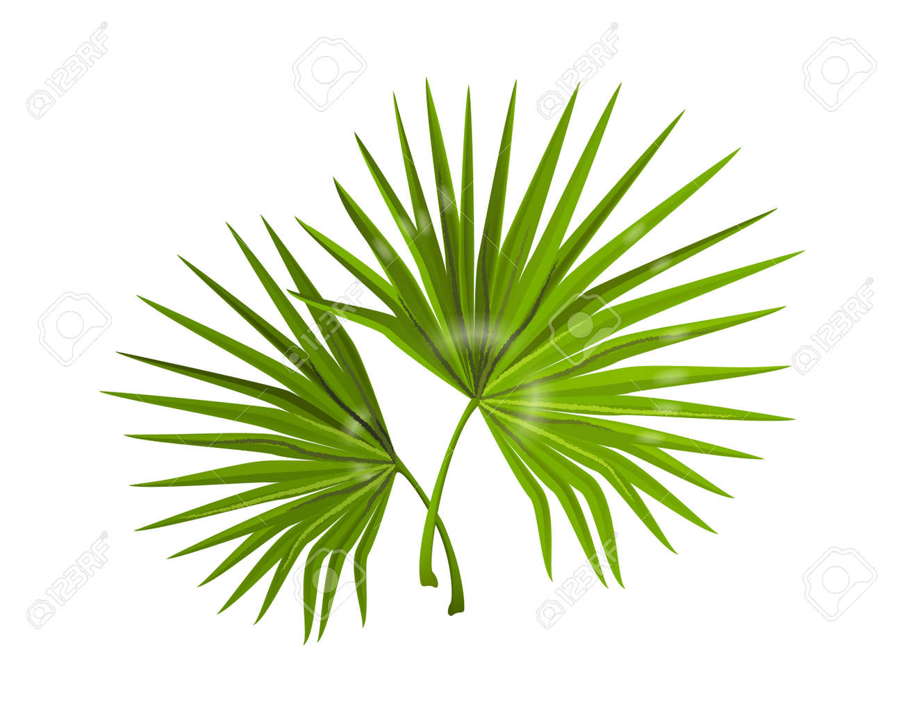 Jungle leaves. Realistic monstera branches with narrow long foliage. Composition of tropical forest plants. Decorative natural background for spa and beauty poster. Vector palm greenery - 166157792