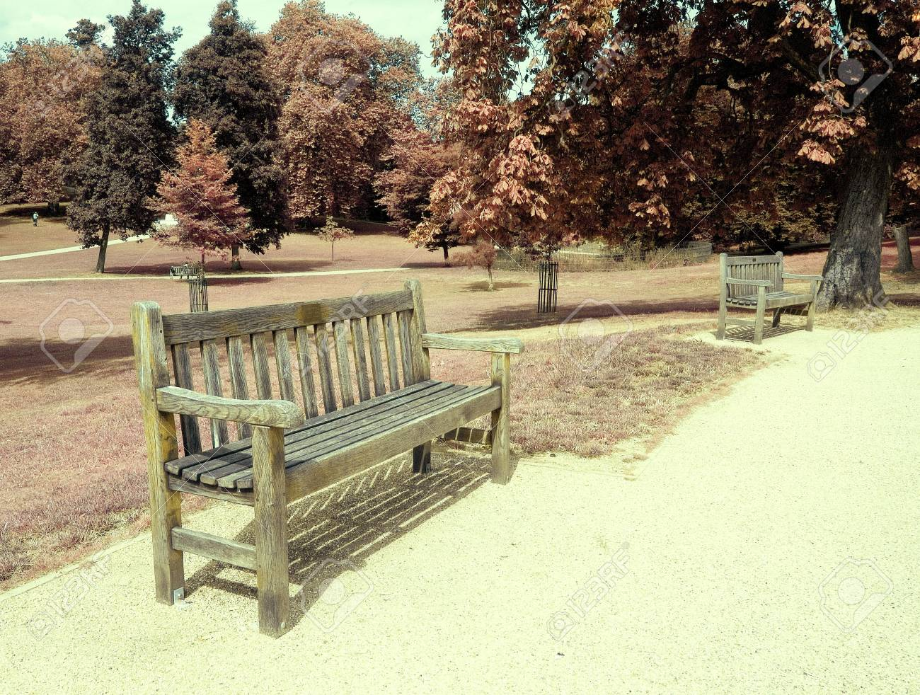 Empty bench in a wooded park in the fall - 5646212