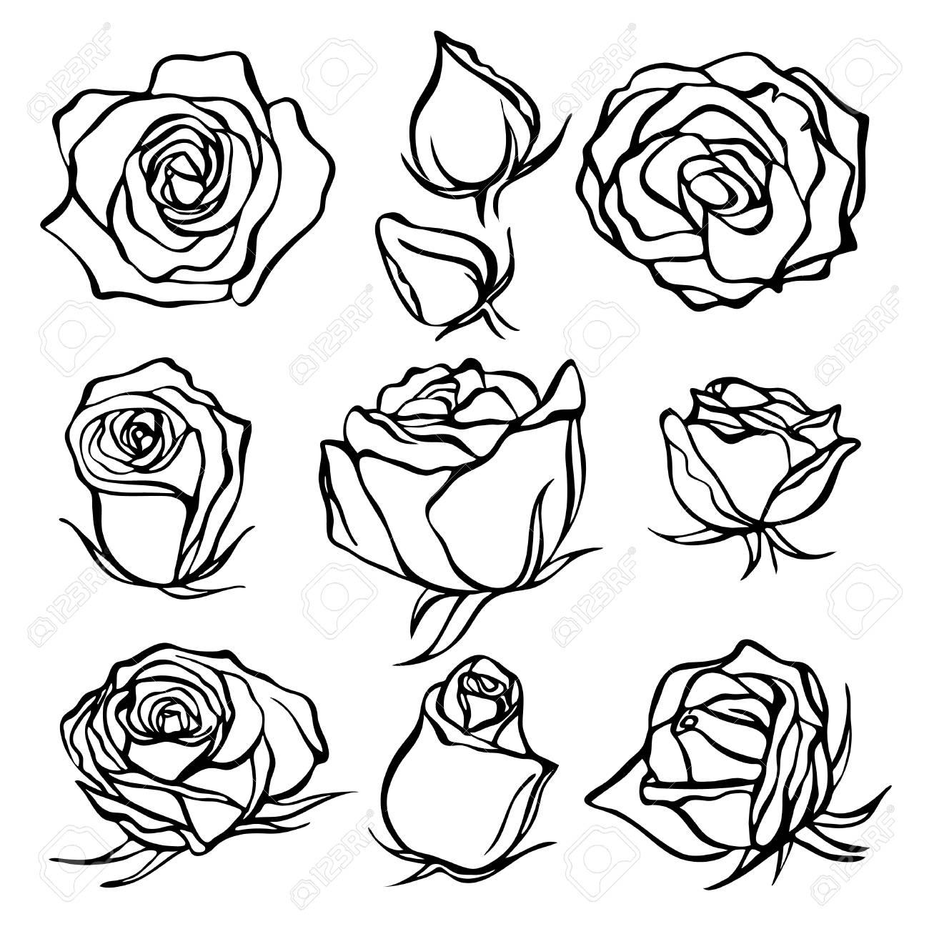 Bosquejo Conjunto Rosa Flor Lápiz Dibujo Flores Con Hojas En Tallo Emblemas Gráficos Dibujados A Mano Curvas De Nivel Y Trazos