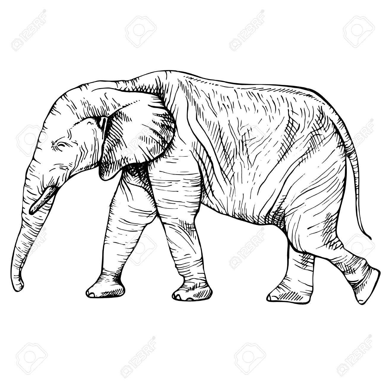 Croquis Elephant En Pleine Croissance Elephant En Mouvement Dessin