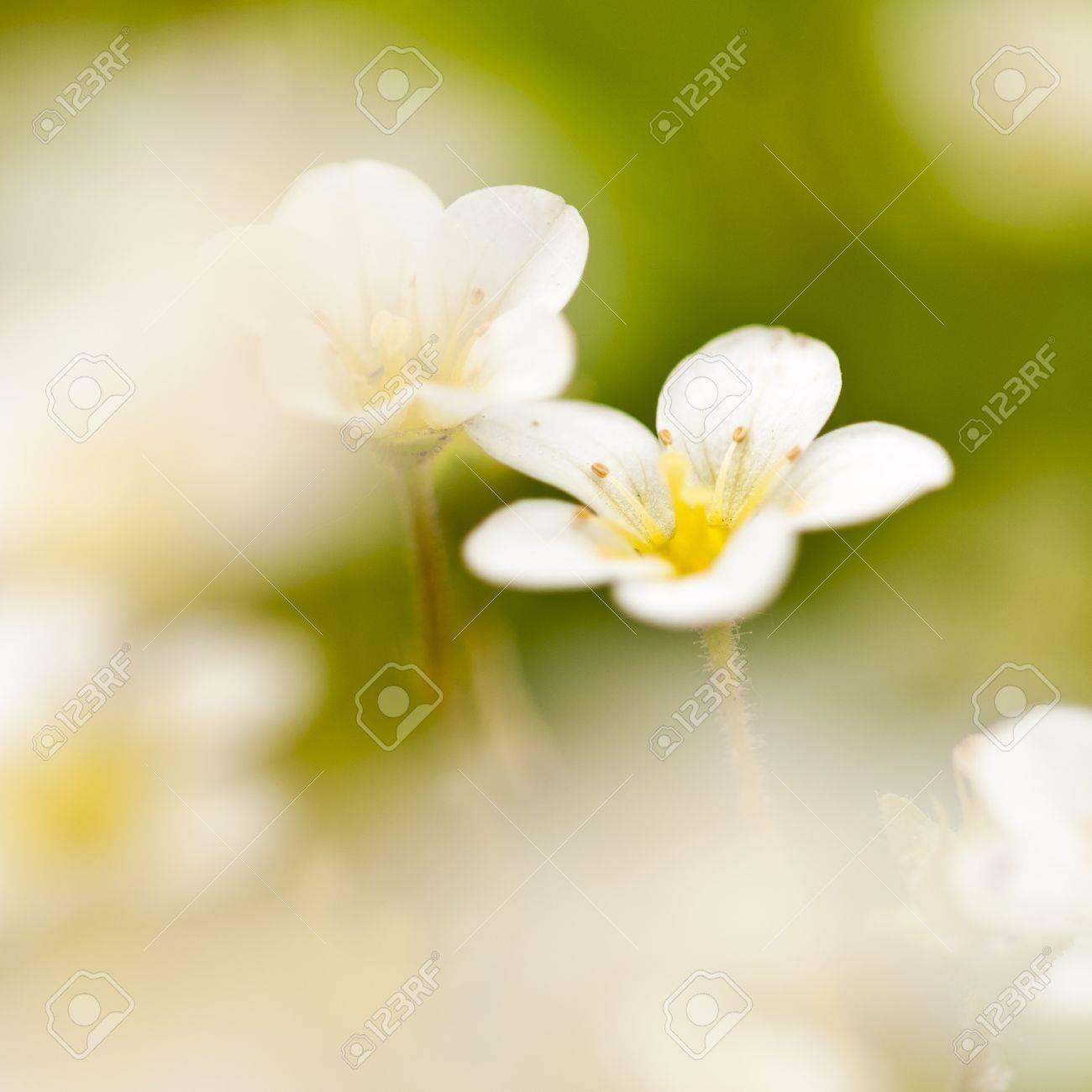 Beautiful little white meadow flowers on a green background stock beautiful little white meadow flowers on a green background stock photo 13647068 mightylinksfo