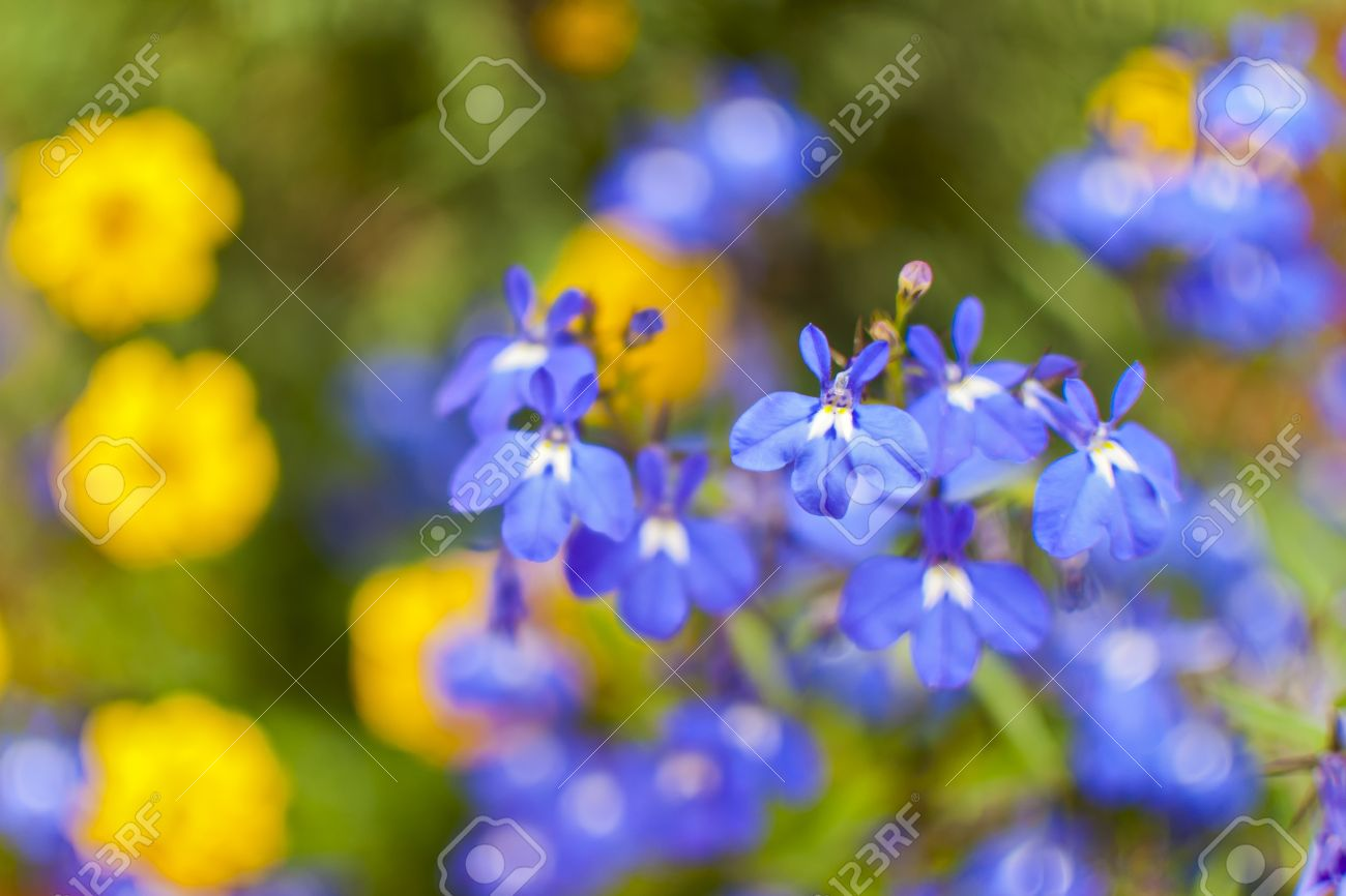 Little pretty blue and yellow flowers on a green background stock little pretty blue and yellow flowers on a green background stock photo 13967447 mightylinksfo Gallery