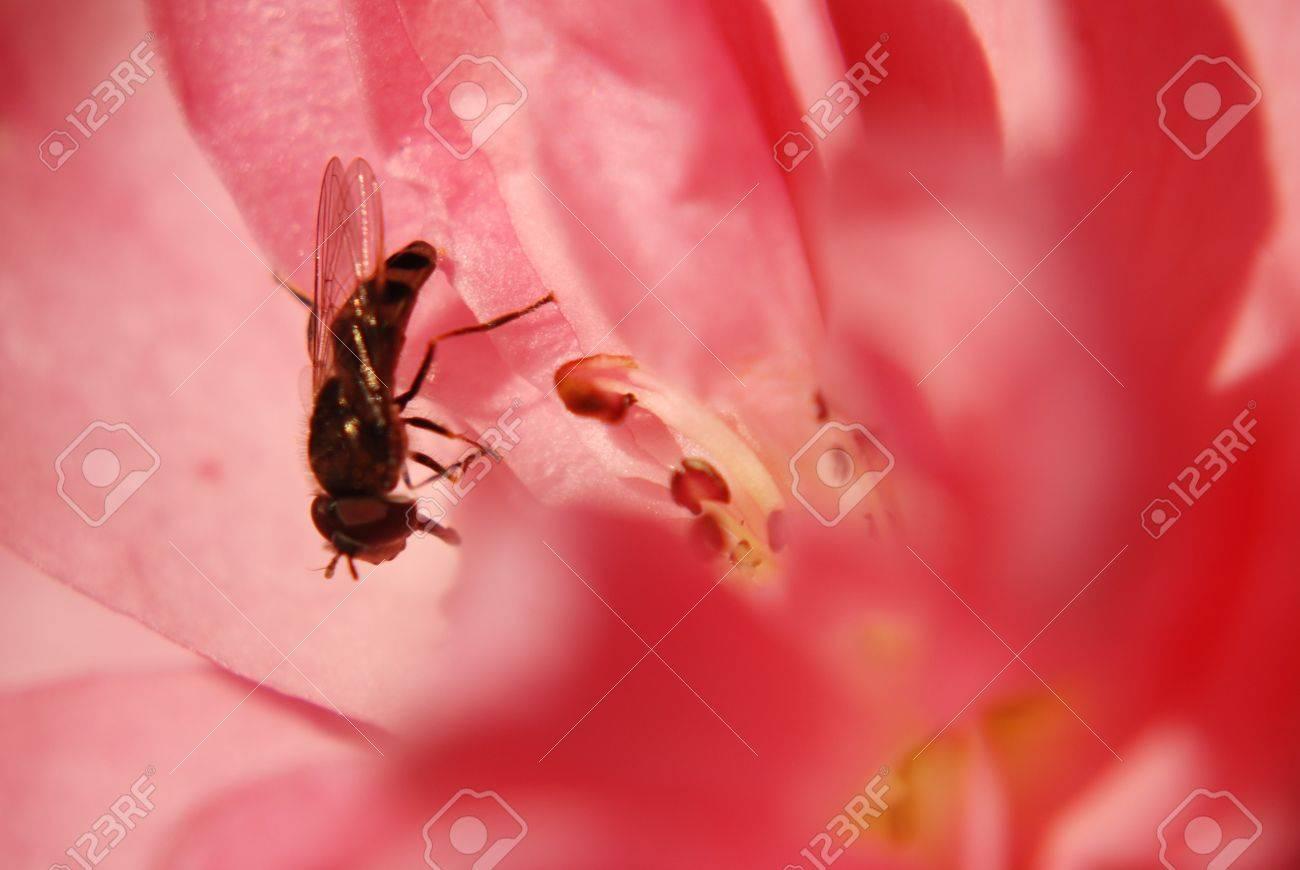 Bee Seance Dans Une Belle Couverture Rose Fleur A La Fin De L