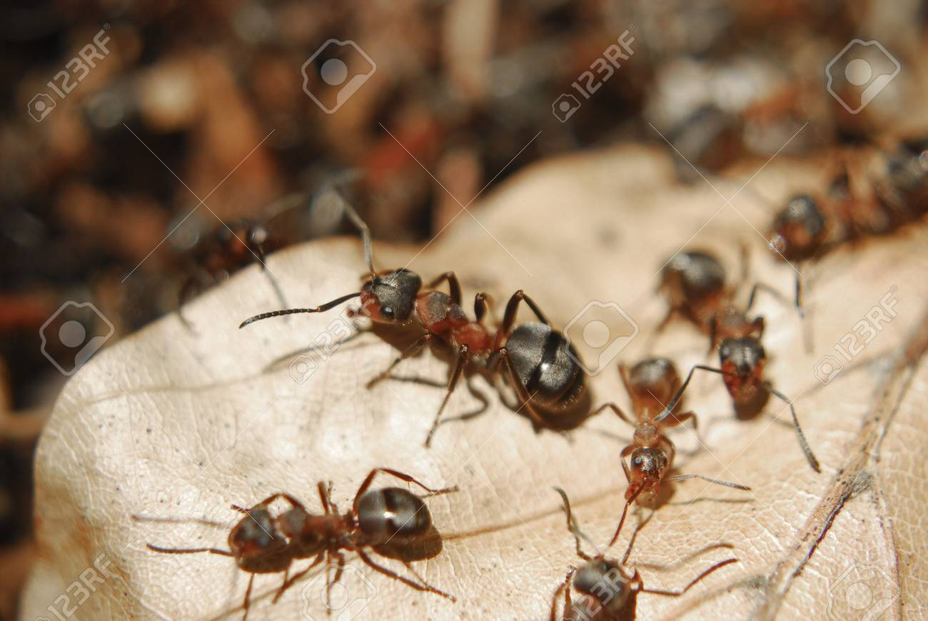 Ants sitting on a leaf Stock Photo - 5364145