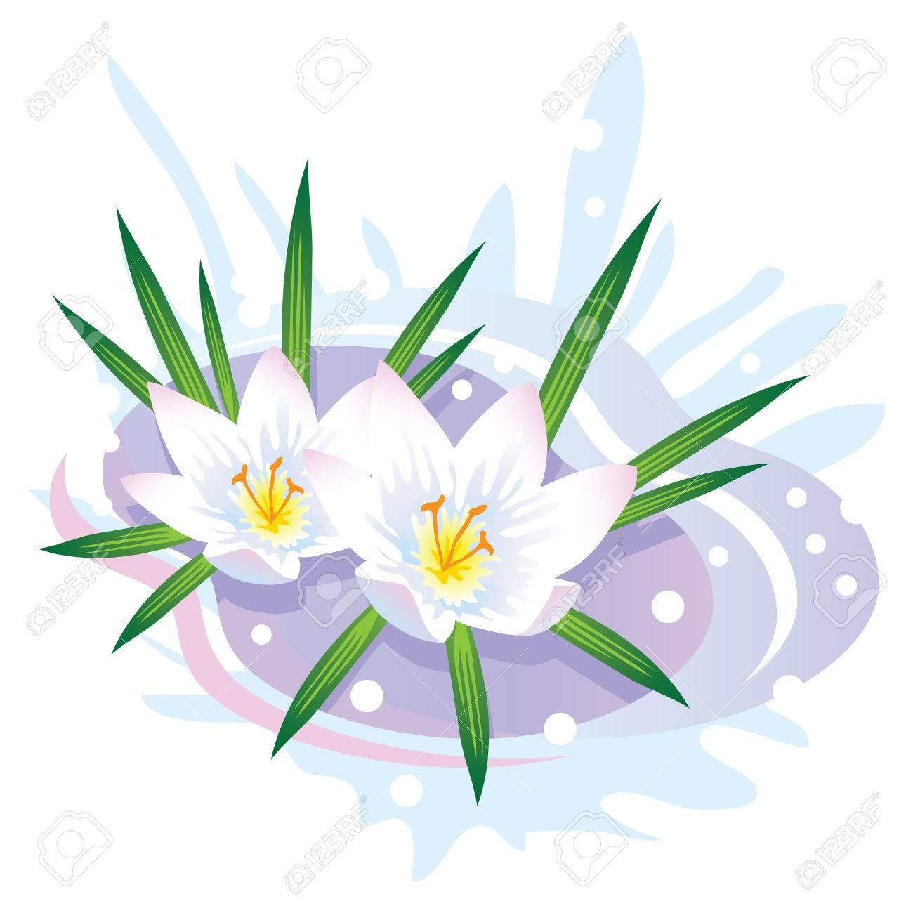 Crocus Blume Die Ersten Fruhlingsblumen Und Schnee Vektor