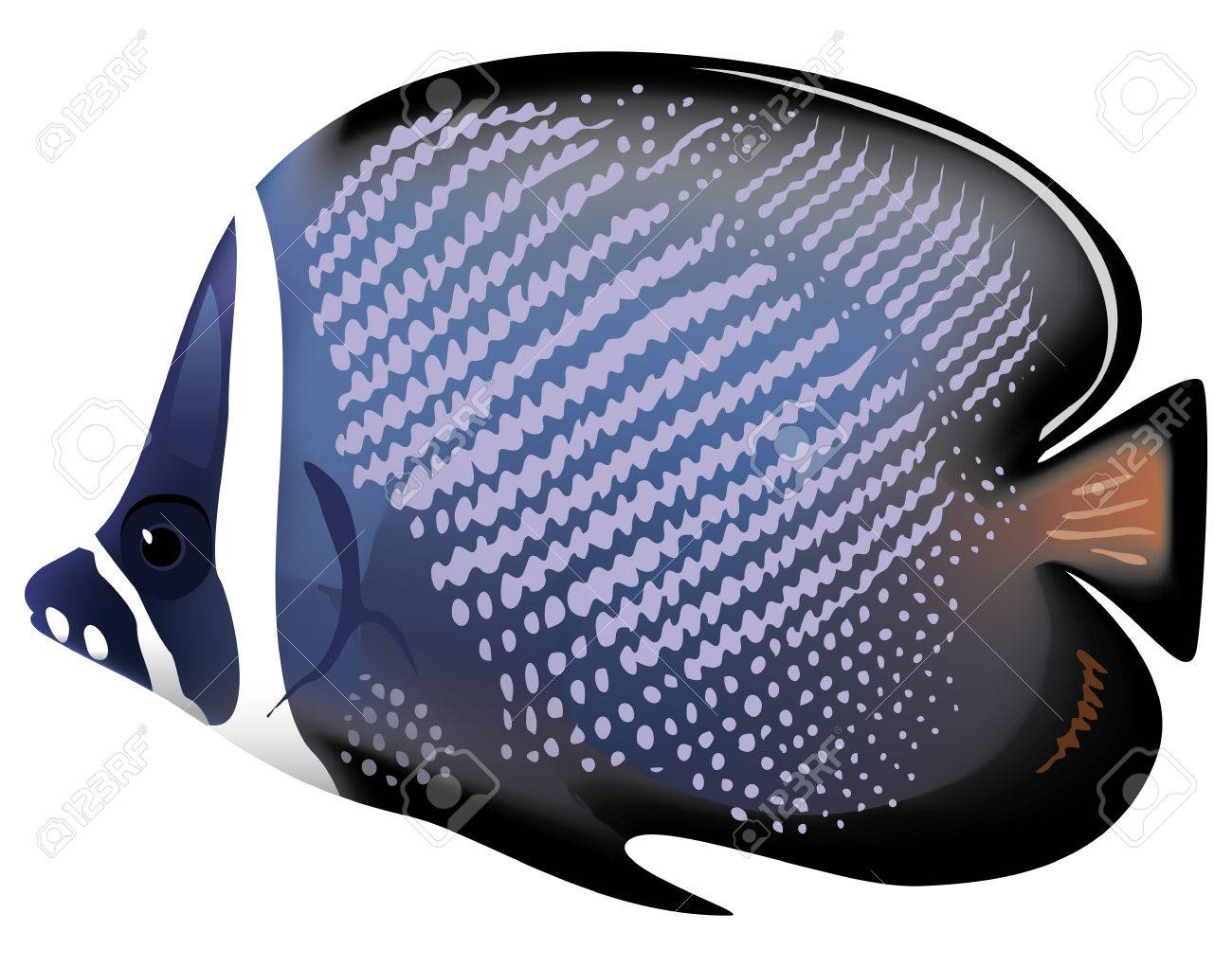 Tropical fish Chaetodon collare. illustration. Stock Vector - 8595916