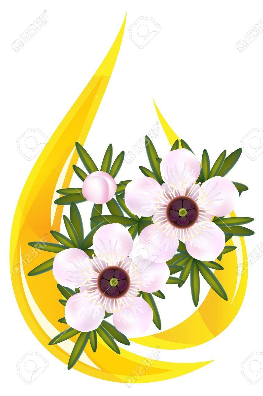 Manuka or Tea tree or just Leptospermum. Stylized drop of essential oil illustration. Stock Vector - 9932275